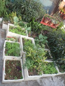 container gardening in styrofoam coolers